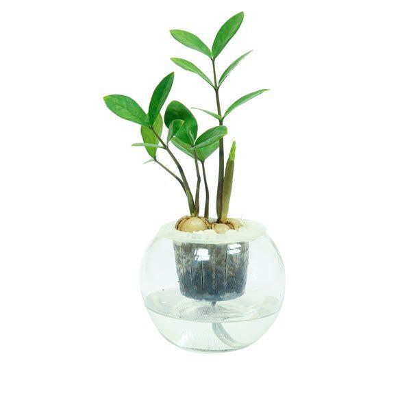 Trồng cây bằng phương pháp thủy sinh